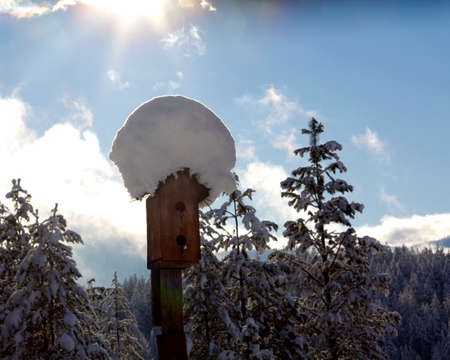 Birdhouse with a Snow cap