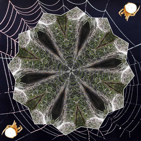 A Kaleidoscope made from Spider Webs