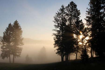 A Foggy Sunrise through silhouetted trees