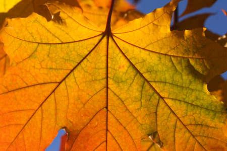 Colorful Leaf Macro