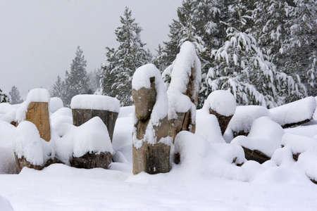 Snow on Wood Pile