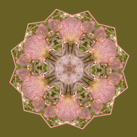 Pink Whimsy Kaleidoscope from Prairie Smoke Blossoms