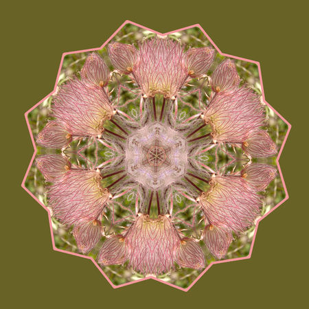 Pink Whimsy Kaleidoscope