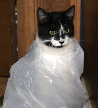 Cat wrapped in plastic bag