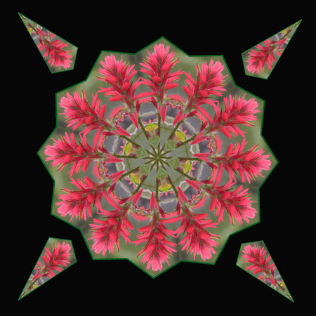 A Kaleidoscope made from the Giant Red Paintbrush Stock Photo