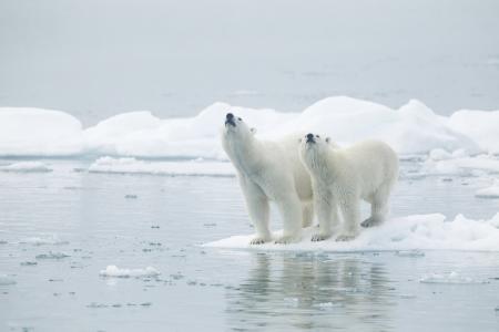 빙산: Svalbards 섬, 노르웨이의 여성과 젊은 남성