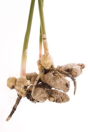 fresh ginger: fresh ginger root. plant isolated on the white background Stock Photo