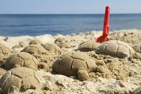 sand turtles. summer and beach scenic. childhood photo