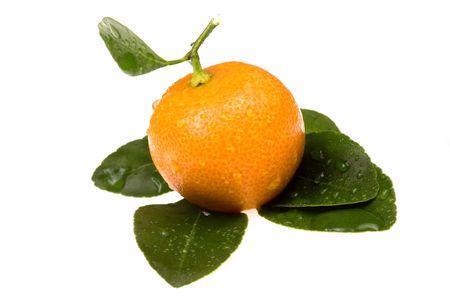 mandarin, calamondin Stock Photo - 5231272
