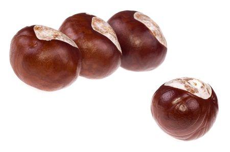 cusp: chestnuts