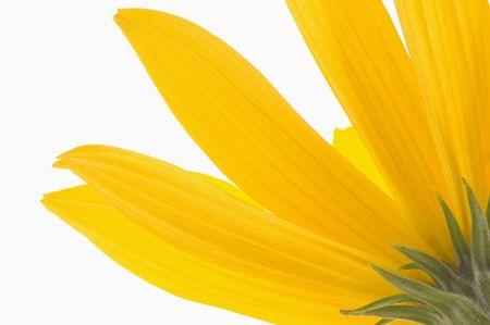 yellow flower Stock Photo - 5231188