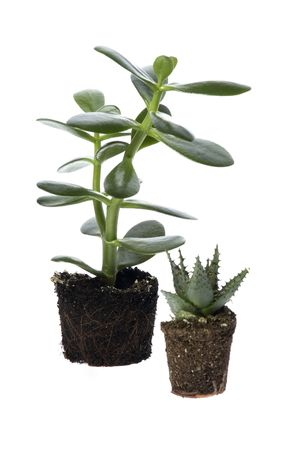 spring plant photo