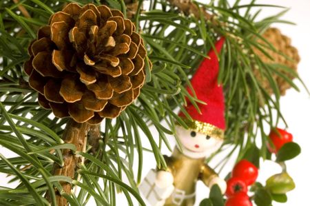 Isolated pine branch with cone. christmas photo