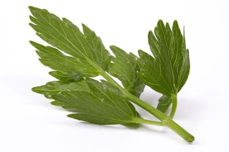 fresh lovage isolated on the white background photo