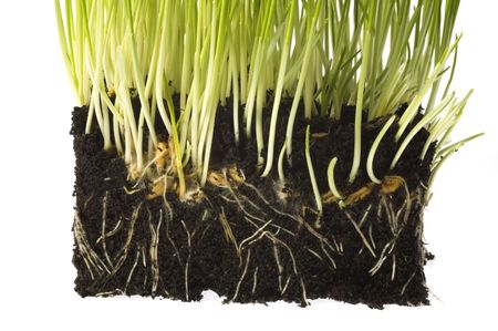 baby plant with root system photo