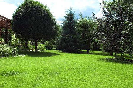 garden. summer scenic photo
