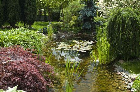 peaceful garden. summertime photo