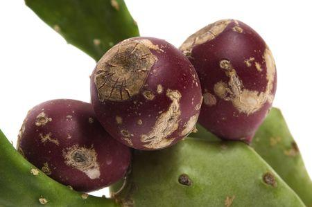 beenderige: Cactusvijg cactus (Opuntia ficus-indica) met rode vruchten