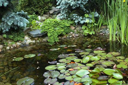 nenuphar: peaceful garden. nenuphar