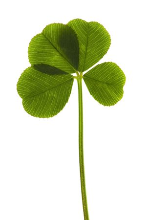 Four Leaf Clover isolated on the white background Stock Photo - 5689106