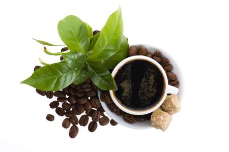 fresh coffee with coffee branch Stock Photo - 6219244