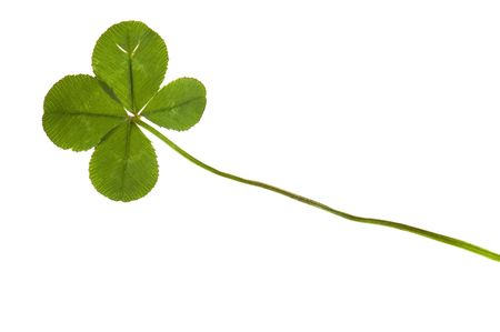 Four Leaf Clover isolated on the white background Stock Photo - 6395413