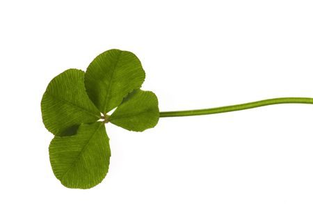 Four Leaf Clover isolated on the white background Stock Photo - 6458799