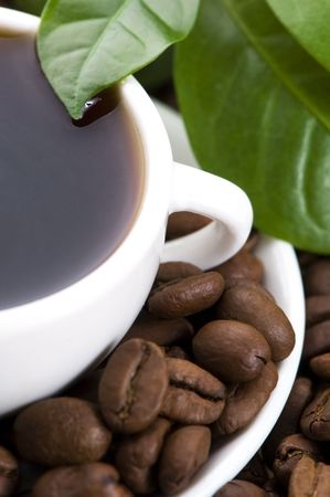 fresh coffee with coffee branch Stock Photo - 6793537