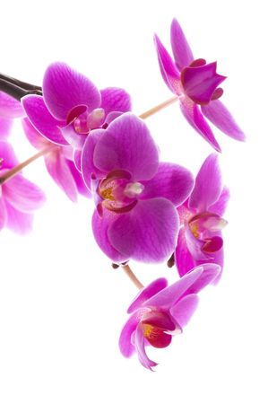 holistic health: orchid