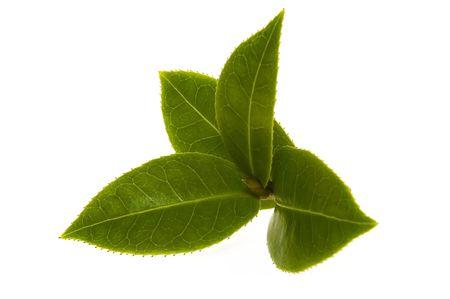 hojas de te: hojas de t� fresco Foto de archivo