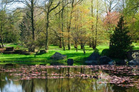 japanese garden. spring Stock Photo - 8606637