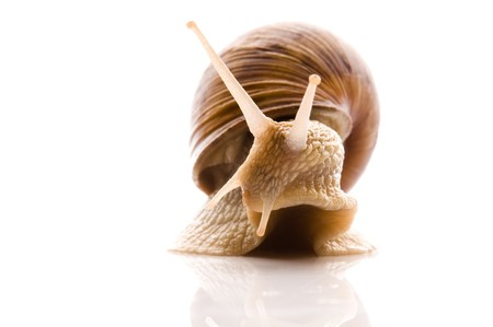 Snail. animal isolated on the white background Stock Photo