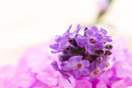 lavender flower and bath salt. spa and wellness Stock Photo - 7814505