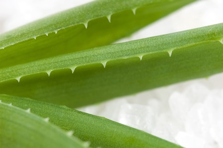 bath items. aloe vera and salt photo