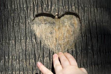 heart carved in tree trunk Stock Photo - 8689213