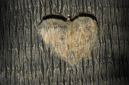 bark background: heart carved in tree trunk