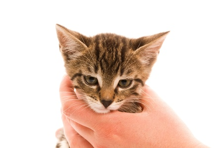 Adorable young cat in womans hand photo