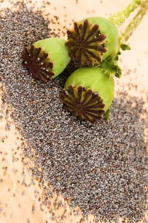 Poppy seeds and poppy heads  photo