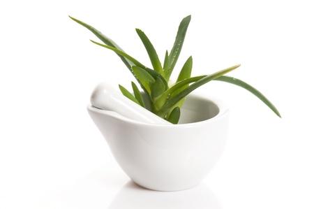 mortero: Aloe vera - fitoterapia