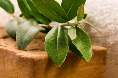 Natural Olive Soap With Fresh Branch Stock Photo - 9997214