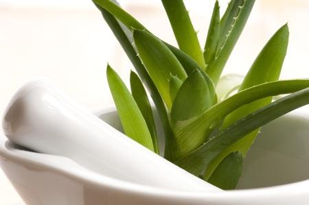 prickle: Aloe vera - herbal medicine
