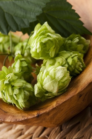 Hop cone and leaves photo