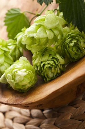 Hop cone and leaves Stock Photo - 13143765