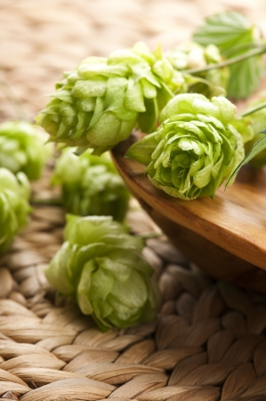 lupulus: Hop cone and leaves Stock Photo
