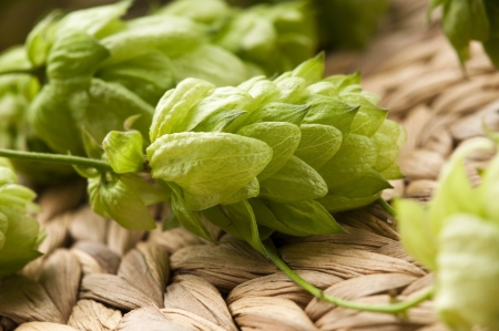 hop cone: Hop cone and leaves Stock Photo