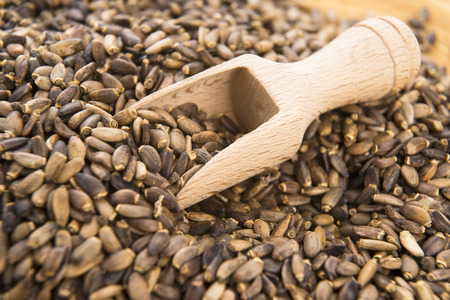 Seeds of a milk thistle (Silybum marianum, Scotch Thistle, Marian thistle )  Standard-Bild