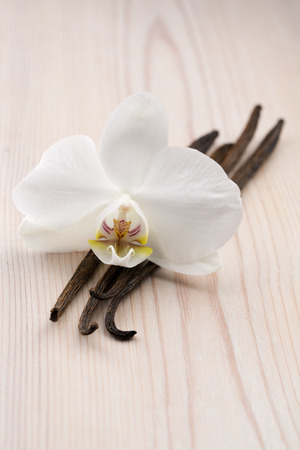 Vanilla pods and flower photo