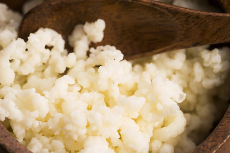 probiotic: Organic probiotic milk kefir grains
