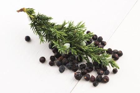 enebro: Planta de Juniper con bayas