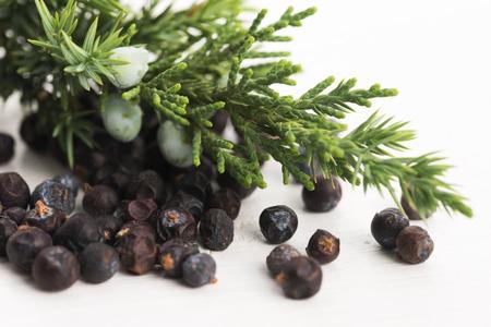 juniper: Juniper plant with berries Stock Photo